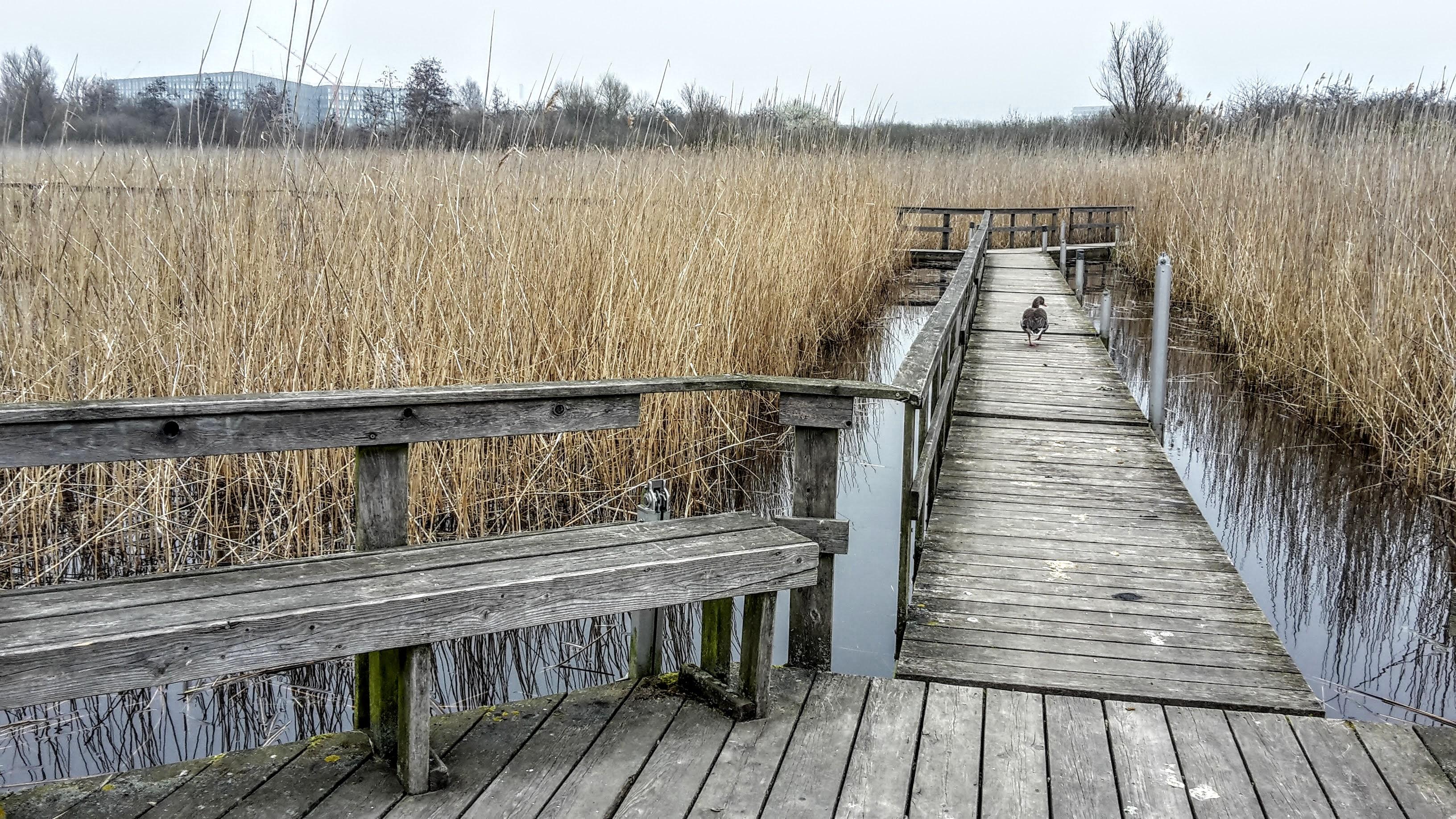 Grønjordssøen.