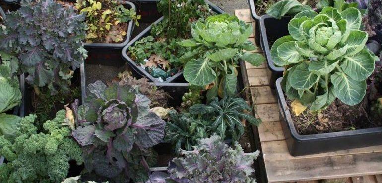 Et udpluk af afgrøderne i Kongens Køkkenhave.