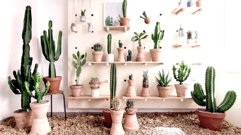 Et udvalg fra Kaktus Københavns hyggelige lille butik.